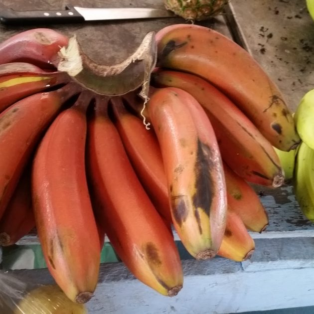 Quito markets and old town tour, ecudor red bananas, Quito tours quito tours from quito Quito ecuador tours Quito day tours Day trips from Quito Day tours from quito otavalo market day trip mindo day trip quito oldtown tour quilotoa loop day trip cotopaxi day trip papallacta day trip