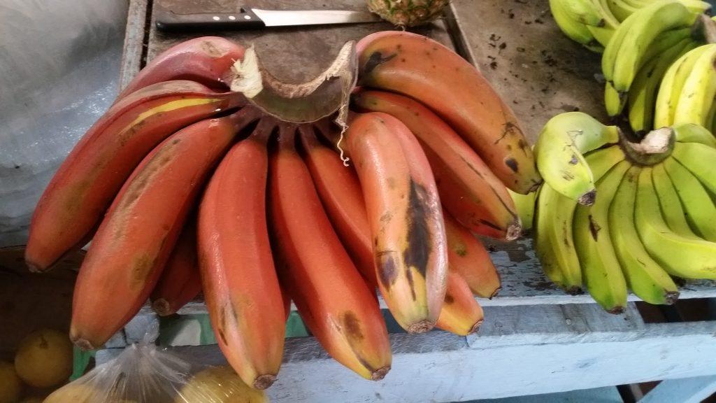 day tours quito, Ecuador´s red bananas, ecuatouring, exotic fruits