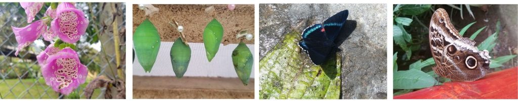butterfly sanctuary mindo, things to do in mindo, ecuatouring