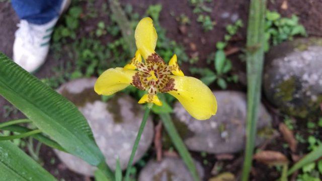 Ecuador an orchids paradise