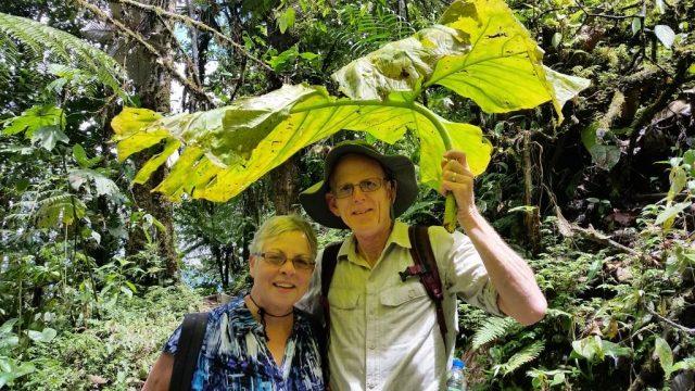 Lush green Ecuador