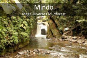 Mindo Day Trip, mindo from quito, Quito Oldtown tour, quito guided tour, quito tour guide, quito city tour, ecuatouring
